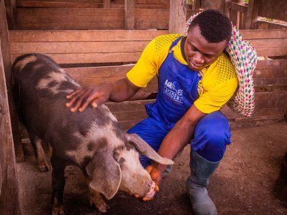 Devenez un professionnel de la porciculture avec ABA